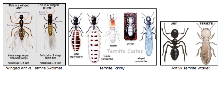 Termites and ants 1