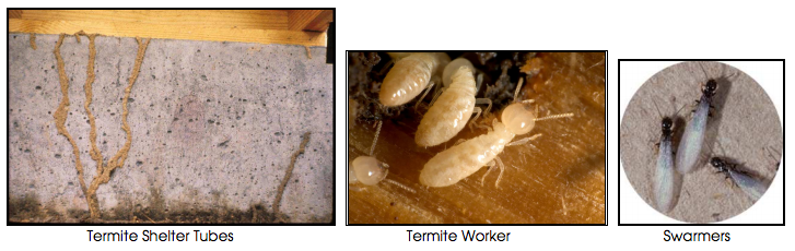 termites and ants 2